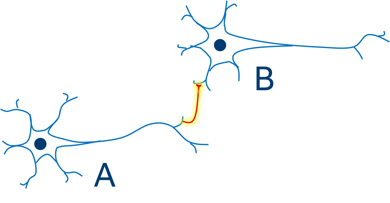 """Hebb's postulate: """"When an axon of cell A is near enough to excite a cell B and repeatedly or persistently takes part in firing it, some growth process or metabolic change takes place in one or both cells such that A's efficiency, as one of the cells firing B, is increased."""""""