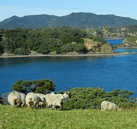 Sheep on a Bay of Islands hillside.jpg