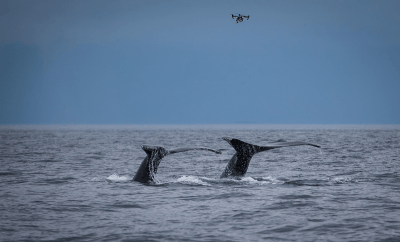 Parley 'SnotBot' expedition brings machine learning and artificial intelligence to whale research - Christian Miller Photography