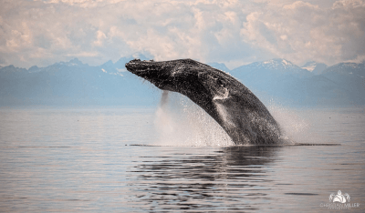Parley 'SnotBot' expedition brings machine learning and artificial intelligence to whale research