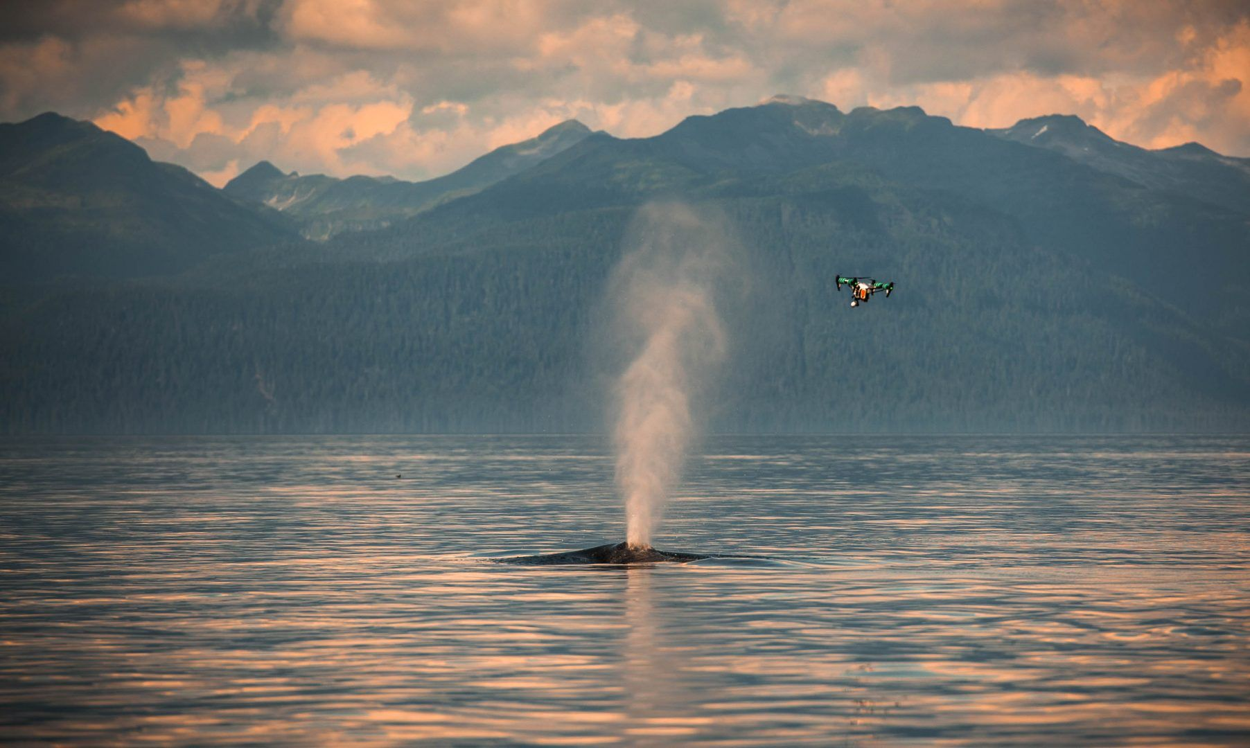 Machine learning algorithms that use drone images to help identify individual whales today; in the future, they will also provide volumetric analysis to measure whale heath.
