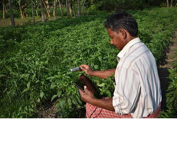 Risab Biswas identifies pathological diseases in tea tree plants