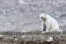 Intel-polar-bear-research-5-small