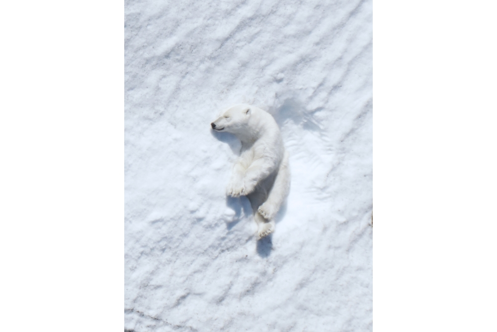 Intel-polar-bear-research-6-small