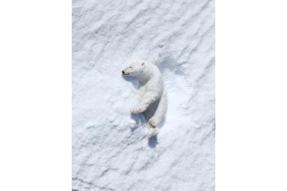 84d6723135cf1 ... Intel-polar-bear-research-6-small ...