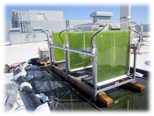Algae1.jpg
